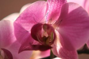 Orchidee | Fotomotiv als Poster oder auf Leinwand zum Kauf