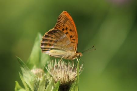 Schützt Artenvielfalt