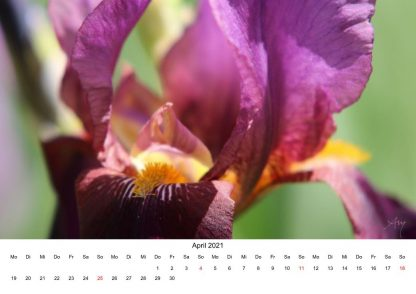 Iris - Kalender 2021