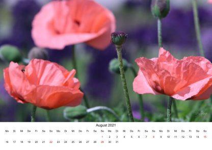 Mohn - Kalender 2021