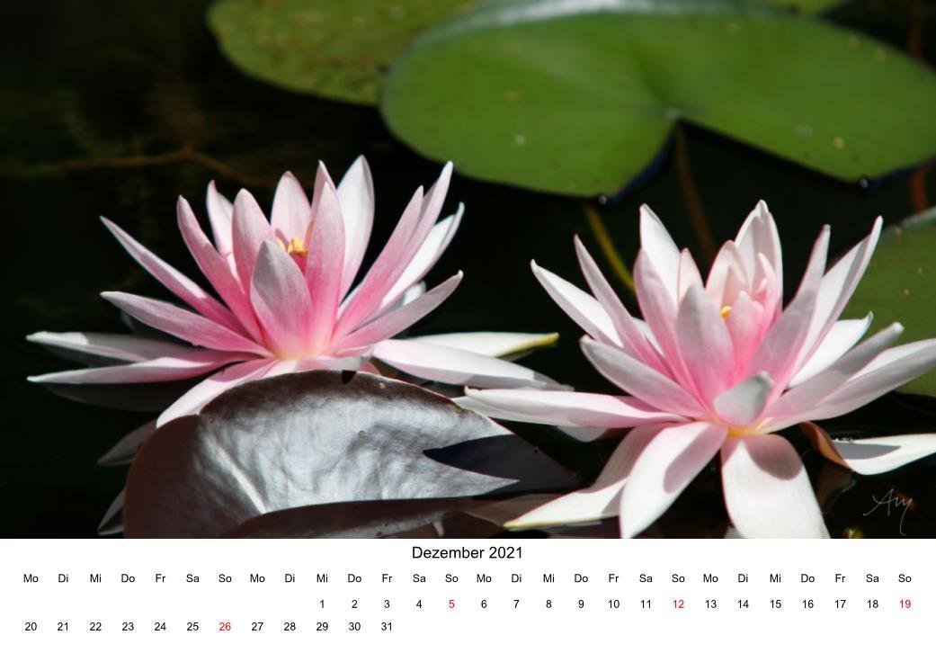 Seerose - Kalender 2021
