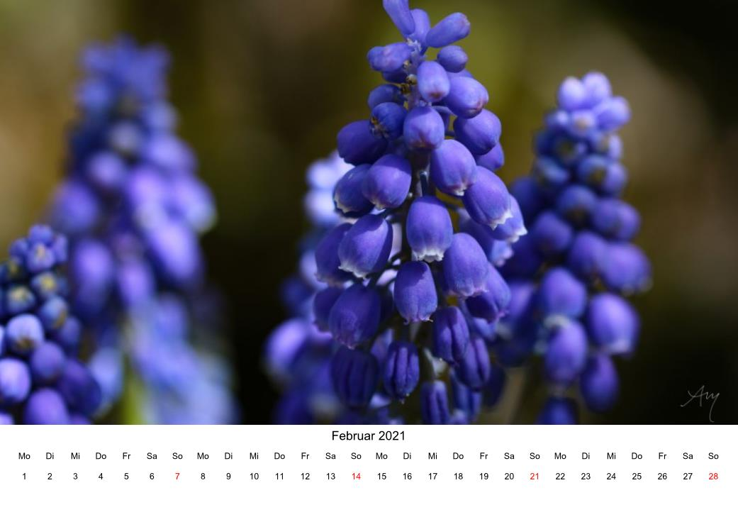 Traubenhyazinthe - Kalender 2021