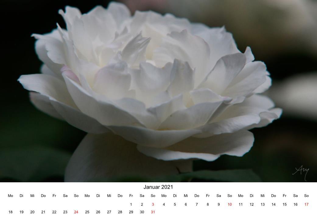 Rose - Kalender 2021