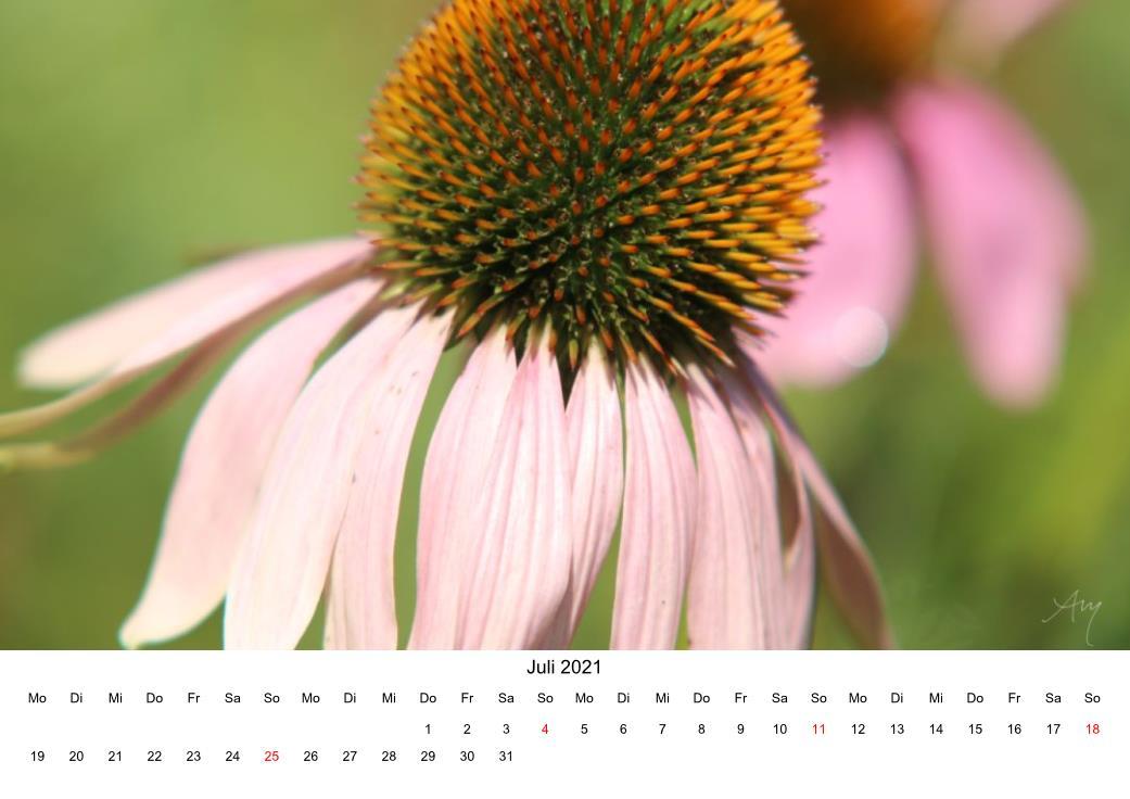 Sonnenhut - Kalender 2021