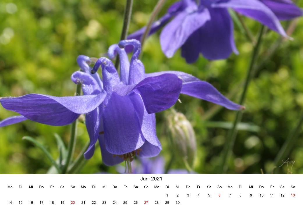 Akelei - Kalender 2021