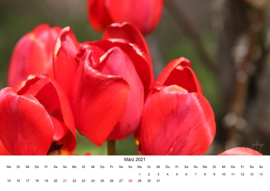 Tulpen - Kalender 2021