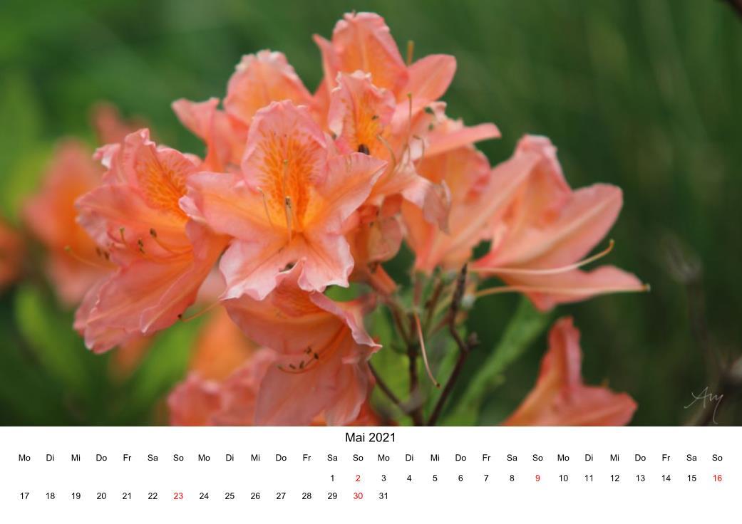 Alpenrose - Kalender 2021