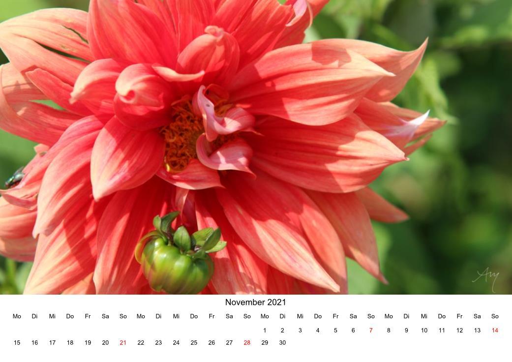 Dahlie - Kalender 2021