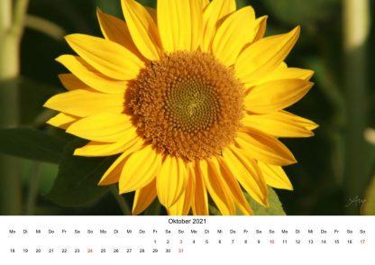 Sonneblume - Kalender 2021