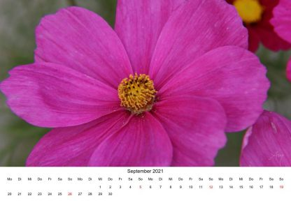 Cosmea - Kalender 2021