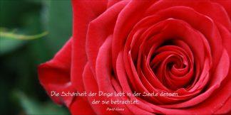 Grußkarte Rote Rose