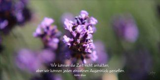Grußkarte Lavendel