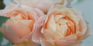 Grußkarte Rose Aprikot